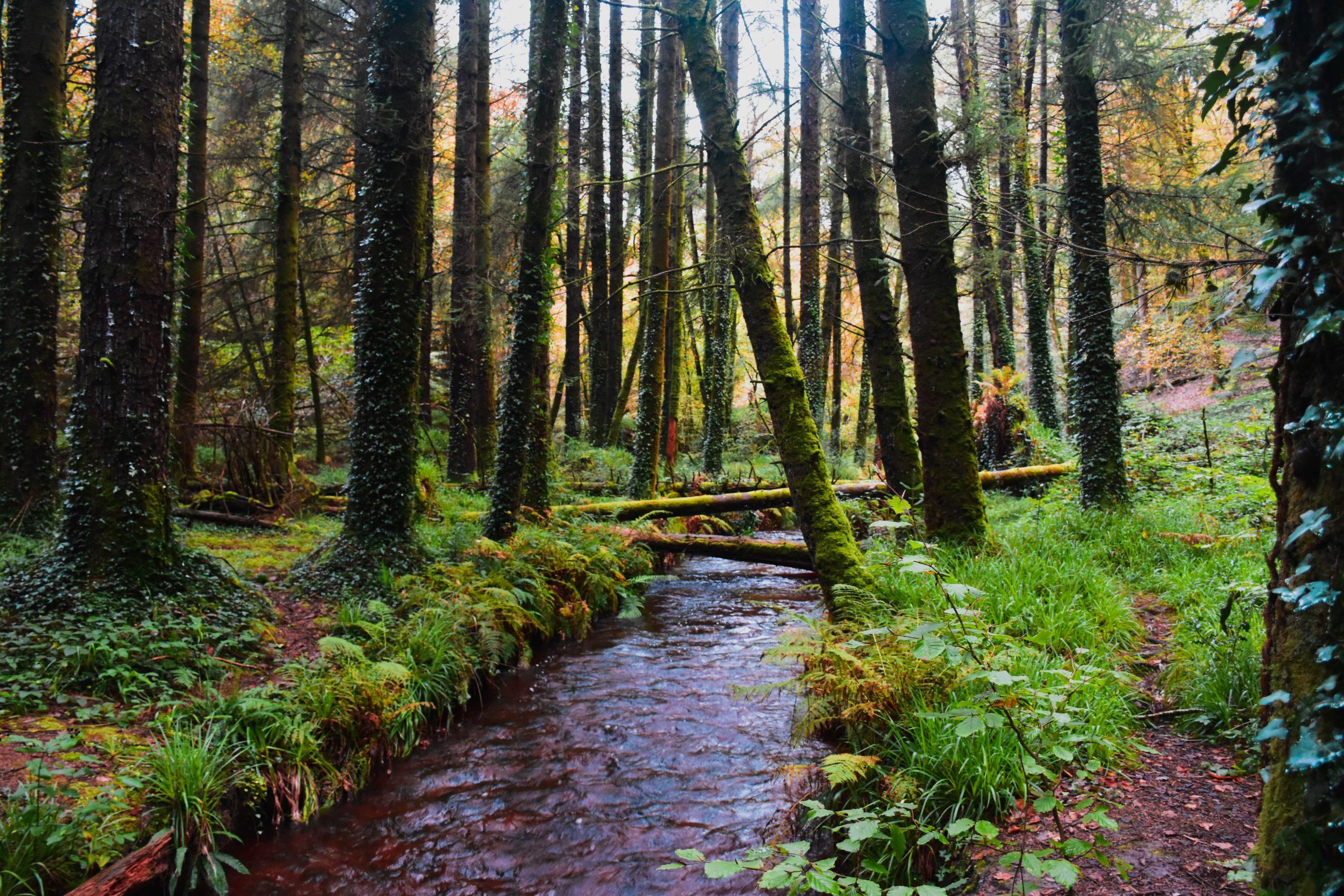 Le bois compressé dans l'Ouest